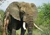 Evaluación de Necesidades: Manejo de Fauna Silvestre y Áreas Protegidas: Encuesta cerrada 1 Septiembre 2017
