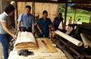 La producción de canela, un producto forestal muy demandado, ayuda a mejorar los ingresos de los agricultores familiares en Viet Nam