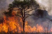 El problema de los incendios forestales