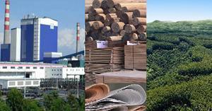 FAO, AFoA e INTA coinciden con la importancia realizar el Foro de Inversión y Financiamiento para el Sector Foresto-industrial y el Seminario de Bioenergía en Argentina