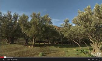 Vídeo: Paisajes en cambio en el Mediterráneo