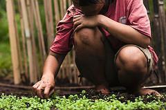 Resumen de la Conferencia Internacional sobre los Bosques para la Seguridad Alimentaria y la nutrición publicado
