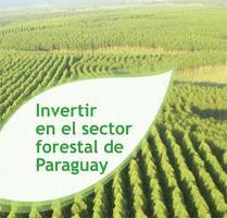 Invertir en el sector forestal de Paraguay