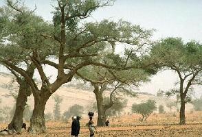 Tisser des partenariats novateurs pour la mise en œuvre de l'Initiative de la Grande Muraille Verte pour le Sahara et le Sahel