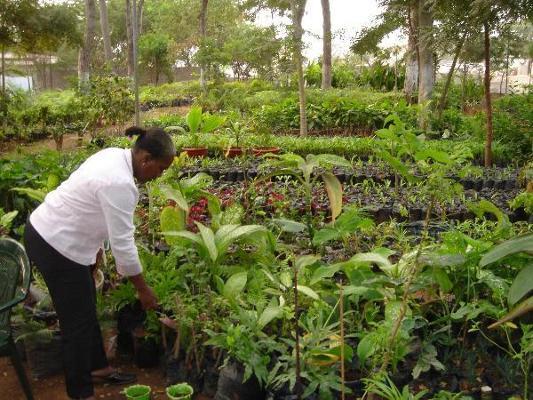 XIVe Congrès forestier mondial : Newsletter n°5