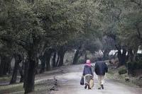 Les forêts méditerranéennes : un réservoir pour les générations futures
