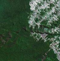 Monitorage mondial des forêts pour atténuer le changement climatique