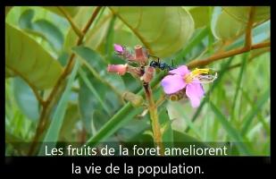 Trésors de la forêt: Les objectifs du Millénaire pour le développement en République Démocratique du Congo