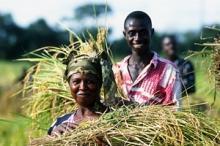 Video relatives aux directives volontaire pour les régimes fonciers