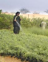 Pour des paysages forestiers résilients aux changements globaux en zones arides