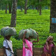 Placer les forêts sous contrôle local favorisera les revenus et la durabilité