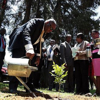 FAO supports Zimbabwe National Forest Policy Formulation Process