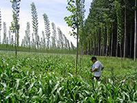 Improving forest biotechnology for family farms