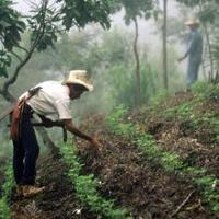 New online forum: Social protection for building the resilience of forest-dependent people