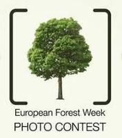 Enter the Value of Forests photo contest to win a trip to the European Forest Week
