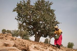 African Union Commission and FAO step up support to Great Green Wall initiative