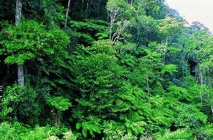 Global Forest Observation Initiative secretariat opens at FAO