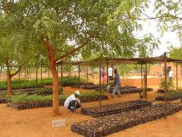 Preparing for large-scale land restoration across Africa's Great Green Wall