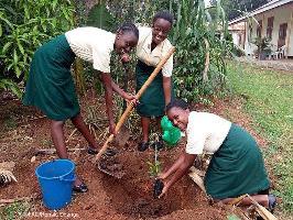 Women working in forestry