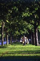 Asia-Pacific looks at greening cities to improve lives and livelihoods