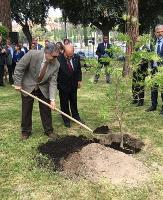 """FAO joins the """"Trees for the Earth"""" campaign"""