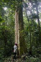 Democratic Republic of Congo signs agreement to address deforestation