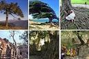 Vote for #COFO23 #ChampionTrees photo contest winner