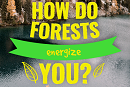 #LoveForests video campaign for International Day of Forests