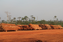 Damage by illegal logging highlighted at environmental crime conference