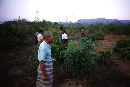 8 million euros from Finland boosts FAO Forestry project fighting climate change in Myanmar