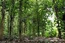 Forests crucial to meeting Sustainable Development Goals and climate change commitments
