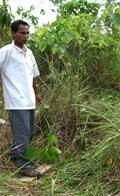 New Web site on Assisted Natural Regeneration of Forests (ANR)