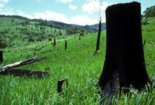 World deforestation decreases, but remains alarming in many countries