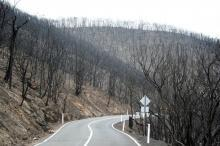 Integrated fire management needed to tame fires - Australian bushfires report in accord with FAO guidelines