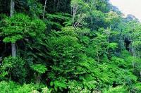 Good forest governance decreases deforestation