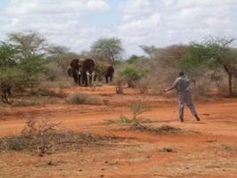 应对大象及河马的侵袭