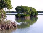 La garantía del agua depende de los bosques y de los humedales