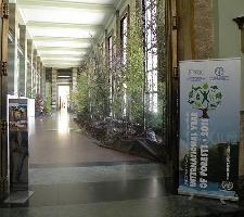 Pour célébrer l'Année internationale des forêts, la CEE-ONU et la FAO installent une «forêt temporaire» au Palais des Nations