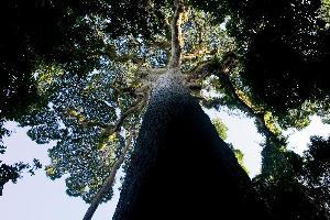 La Convention sur la diversité biologique lance un nouvel outil Web de mise en œuvre en soutien à la protection et l'utilisation durable des forêts
