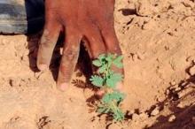 La FAO intensifie sa lutte contre la désertification en Afrique