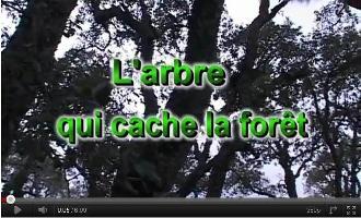 Vidéo: L'arbre qui cache la forêt