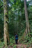 Nouveau site sur l'évaluation et la surveillance de la gouvernance forestière