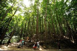 La FAO lance un concours photographique dans le cadre de l'Année internationale des forêts