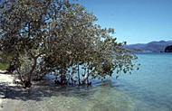 News release: Loss of mangroves alarming
