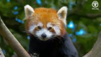Día Internacional de los Bosques 2020: Bosques y biodiversidad