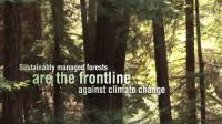 Forêts et changement climatique: journée internationale des forêts 2015