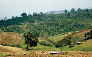 IMD in Uganda