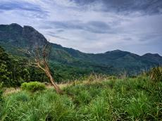 The importance of the Nilgiri mountains