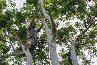 Desafíos de la información sobre bosques y cambio climático