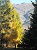 Toward sustainable forest management in the Kyrgyz Republic